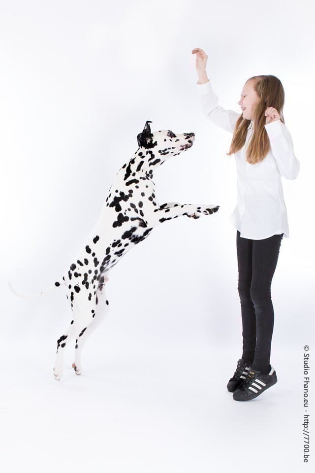Photo animal de compagnie chien au studio 7700.BE